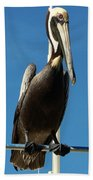 Pelican Dreams Beach Towel