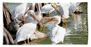 Pelican Squabble Beach Towel