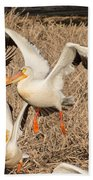 Pelican Takeoff Beach Towel