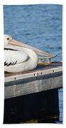 Pelican Taking Time Out 691 Beach Towel