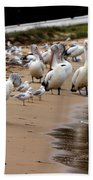 Pelicans At Pearl Beach 1.0 Beach Towel