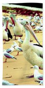 Pelicans At Pearl Beach 4.1 Beach Towel