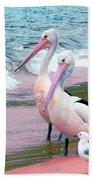 Pelicans At Pearl Beach 5.1 Beach Towel