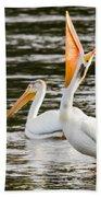 Pelicans Fishing Beach Towel