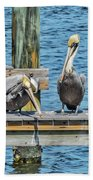 Pelicans Waiting For Their Ship To Come In Beach Towel by Bob Slitzan
