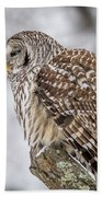 Perched Barred Owl Beach Towel