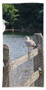 Perched Gulls Beach Towel