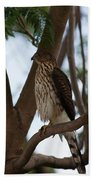 Perched Hawk Beach Towel