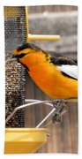 Perched Oriole Beach Towel