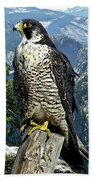 Peregrine Falcon, Yosemite Valley, Western Sierra Nevada Mountain, Echo Ridge Beach Towel