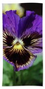 Perfect Pansy  Beach Towel