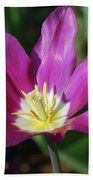 Perfect Single Dark Pink Tulip Flower Blossom Blooming Beach Towel