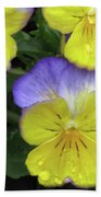 Perfectly Pansy 12 Beach Towel