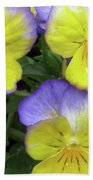 Perfectly Pansy 13 Beach Towel