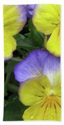 Perfectly Pansy 14 Beach Towel
