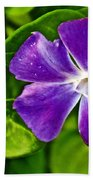 Periwinkle At Pilgrim Place In Claremont-california Beach Towel