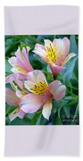 Peruvian Lily Of The Incas Beach Towel