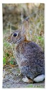 Peter Cottontail Beach Towel