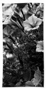 Petunias 1 Black And White Beach Towel