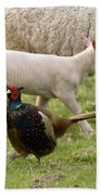 Pheasant And Lamb Beach Towel