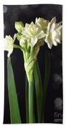 Photograph Of Narcissus Erlicheer A White Flower Beach Towel