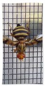 Picture Winged Bee Fly On Screen     Spring      Indiana Beach Towel