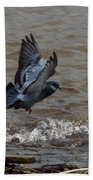 Pigeon Getting Ready To Land Beach Towel