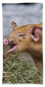 Piglet Eating Hay Beach Towel