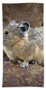 Pika - Weminuche Wilderness - Colorado Beach Towel