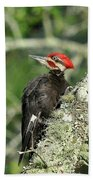 Pileated Perch Beach Towel