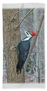 Pileated Woodpecker - Dryocopus Pileatus Beach Towel