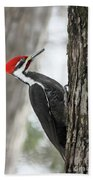 Pileated Woodpecker In Spring Beach Towel
