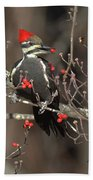 Pileated Woodpecker Lunch Beach Towel