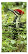 Pileated Woodpecker On The Ground No. 1 Beach Towel