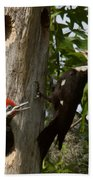 Pileated Woodpecker Ready To Fledge Beach Towel