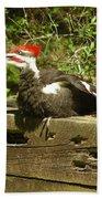 Pileated Woodpecker1 Beach Towel