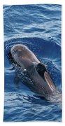 Pilot Whale 2 Beach Towel