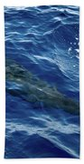 Pilot Whale 4 Beach Towel