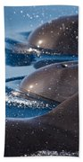 Pilot Whales 1 Beach Towel