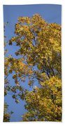 Pin Oaks In The Fall No 1 Beach Towel