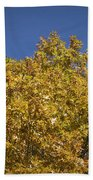 Pin Oaks In The Fall No 2 Beach Towel