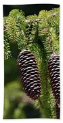 Pine Cones On The Bough Beach Towel