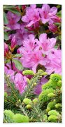 Pine Conifer Pink Azaleas 30 Summer Azalea Flowers Giclee Art Prints Baslee Troutman Beach Towel