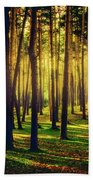 Pine Forest In La Boca Del Asno-segovia-spain Beach Towel