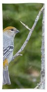 Pine Grosbeak Beach Towel