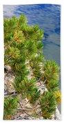Pine Needles Over Water Beach Towel