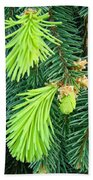 Pine Tree Branches Art Prints Conifer Forest Baslee Troutman Beach Towel