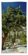 Pine Tree In Yosemite Beach Towel
