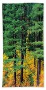 Pine Trees In Autumn Beach Towel