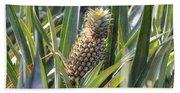 pineapple plantation in Kerala - India Beach Towel